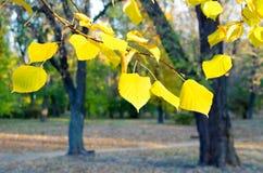 Escena del otoño en el parque Fotografía de archivo libre de regalías