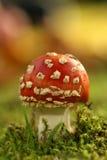 Escena del otoño: toadstool Fotos de archivo libres de regalías