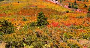 Escena del otoño en Colorado Imagenes de archivo