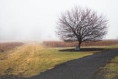 Escena del país con el árbol solitario y el fondo de niebla foto de archivo libre de regalías
