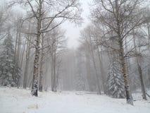 Escena del paisaje del invierno ocultada por la niebla después de una tormenta de la nieve fotografía de archivo libre de regalías