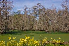Escena del pantano Imagenes de archivo