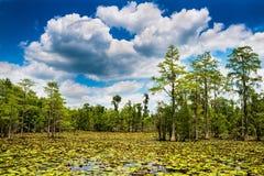 Escena del pantano del verano Imagen de archivo