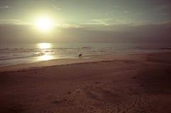 Escena del paseo del caballo de la playa de la puesta del sol en la costa arenosa de Atlántico Imagenes de archivo