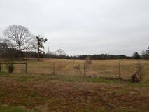 Escena del pasto Imagenes de archivo