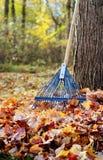 Escena del patio trasero del otoño fotos de archivo