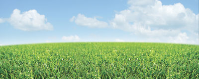 Escena del prado foto de archivo