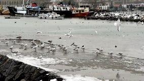 Escena del puerto del invierno con las gaviotas almacen de metraje de vídeo