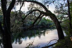 Escena del río de Suwanee Fotografía de archivo