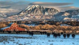 Escena del Ranching del invierno en Colorado occidental fotos de archivo libres de regalías