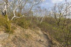 Escena del rastro de la primavera Foto de archivo
