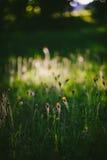 Escena del verano de la tarde Foto de archivo