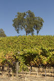 Escena del viñedo de California imágenes de archivo libres de regalías