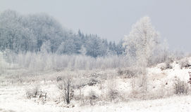 Escena escarchada del invierno Foto de archivo libre de regalías