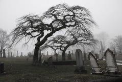Escena fantasmagórica del cementerio con los árboles asustadizos a imagen de archivo libre de regalías