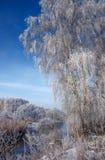 Escena fascinadora del invierno Foto de archivo libre de regalías
