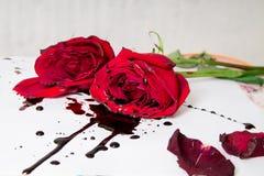 Escena g?tica dram?tica con las rosas rojo oscuro con gotas de sangre en el fondo blanco imagenes de archivo