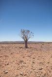 Escena genérica del desierto con el árbol del estremecimiento en el mediodía Fotos de archivo libres de regalías