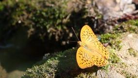 Escena hermosa de la naturaleza de la mariposa almacen de metraje de vídeo