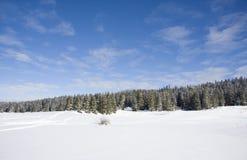 Escena hermosa del invierno Foto de archivo