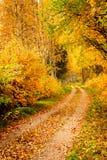 Escena hermosa del otoño Fotografía de archivo