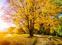 Escena hermosa del otoño en parque en la salida del sol Fotografía de archivo