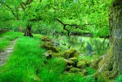 Escena hermosa del río fotografía de archivo