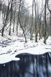 Escena hivernal del bosque Imagenes de archivo