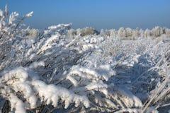 Escena hivernal pintoresca Foto de archivo libre de regalías