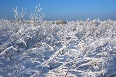 Escena hivernal pintoresca Cárpato, Ucrania, Europa Imagen de archivo