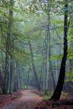 Escena holandesa del bosque de la caída del otoño Imágenes de archivo libres de regalías