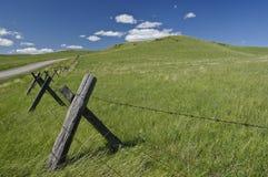 Escena idílica del pasto Foto de archivo
