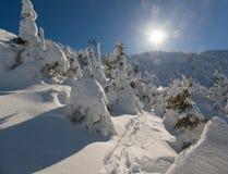 Escena iluminada por el sol de la naturaleza del invierno Imágenes de archivo libres de regalías