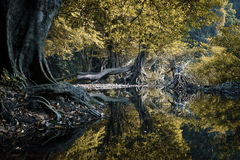 Escena mística y hermosa del bosque Foto de archivo libre de regalías