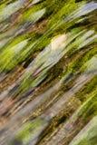 Escena otoñal Fotografía de archivo