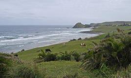 Escena pastoral de la playa Imagen de archivo libre de regalías