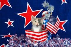 Escena patriótica del gatito del calicó Fotografía de archivo