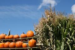 Escena rústica de la cosecha con las calabazas y los cornstalks Fotos de archivo libres de regalías