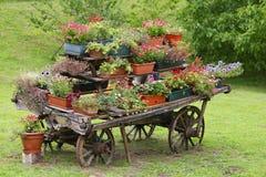 Escena rural con las flores en potes durante el florecimiento Fotografía de archivo