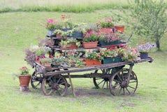 Escena rural con las flores en potes durante el florecimiento Foto de archivo