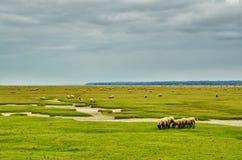 Escena rural con las ovejas Fotos de archivo libres de regalías
