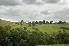 Escena rural de campos y setos y árboles verdes Foto de archivo libre de regalías