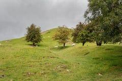 Escena rural de campos y setos y árboles verdes Imagenes de archivo