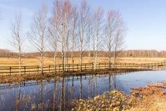 Escena rural de la primavera Fotografía de archivo libre de regalías