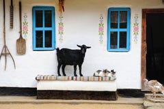 Escena rural de la vida. Cabra y un gato en el banco. Fotos de archivo