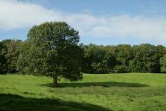 Escena rural del campo en el districto del lago Foto de archivo libre de regalías