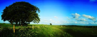 Escena rural del campo en Wiltshre Imagenes de archivo