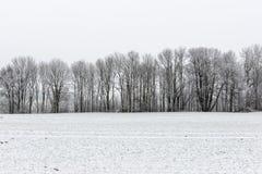Escena rural del invierno con niebla y campos blancos Imágenes de archivo libres de regalías