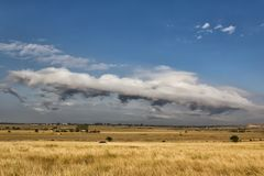 Escena rural hermosa con los campos y árboles de oro y nubes blancas hermosas Fotografía de archivo