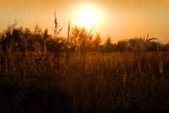 Escena rural - puesta del sol del verano Foto de archivo